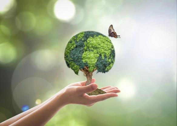 conservacaoambientalshutterstock_287860979