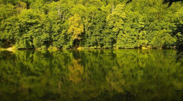 forest-1185127_800-800x445.jpg