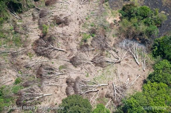 Logging in Para State
