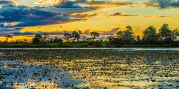 pantanal-2-630x315