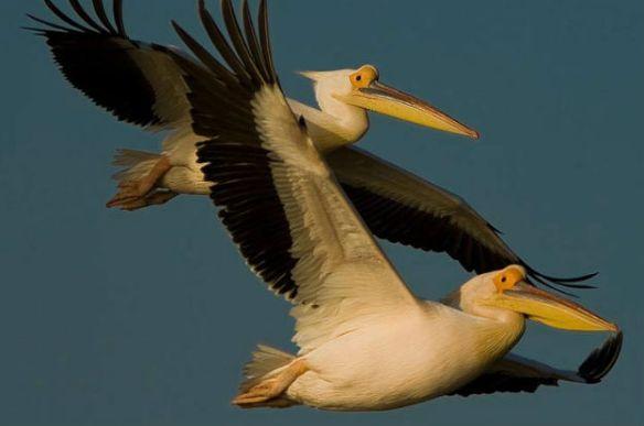 05-10-2013migratorybirds