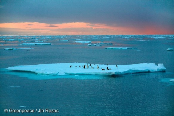 Emperor and Adeli Penguins in the Southern Ocean